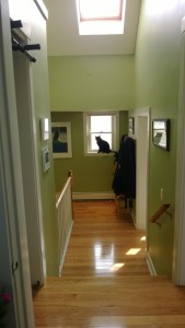 hardwood floors in upstairs hall, with darwin in the window