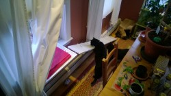 dining room cat platform and ramp