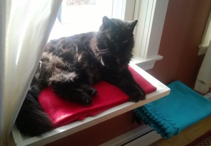 Dining Room Cat Platform – Part 3