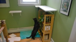 darwin checking out the new upstairs hall cat platform