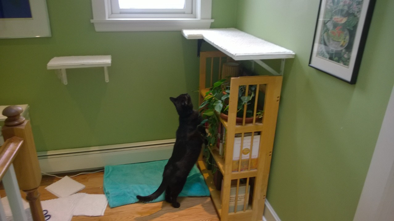 Upstairs Cat Platforms – Part 3