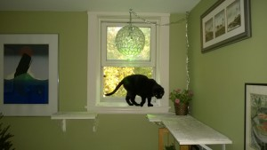 birdie on the upstairs hall cat platforms enjoying the open window