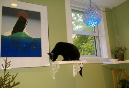 Upstairs Cat Platforms – Part 5