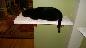 birdie sleeping on her new downstairs hall cat platform