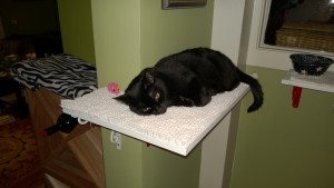 birdie sleeping on her new downstairs hall cat platform