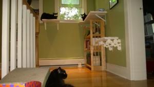 darwin, birdie and bonkers in the upstairs hallway