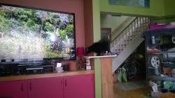 birdie investigating the new living room cat platform