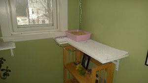 upstairs hall cat platforms and litter box
