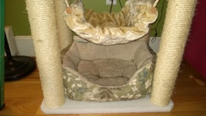 cat bed under the living room cat tree
