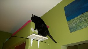 birdie checking out the new living room alcove cat platforms