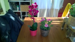 ikea fake orchid in red metal pot and fake daisy in basket pot