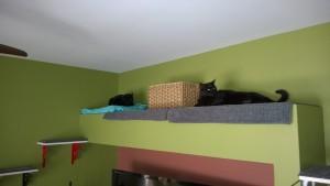 living room alcove darwin birdie cat platform