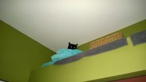 birdie in the living room cat alcove