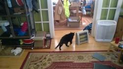 birdie on the living room floor