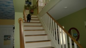 birdie coming down the stairs