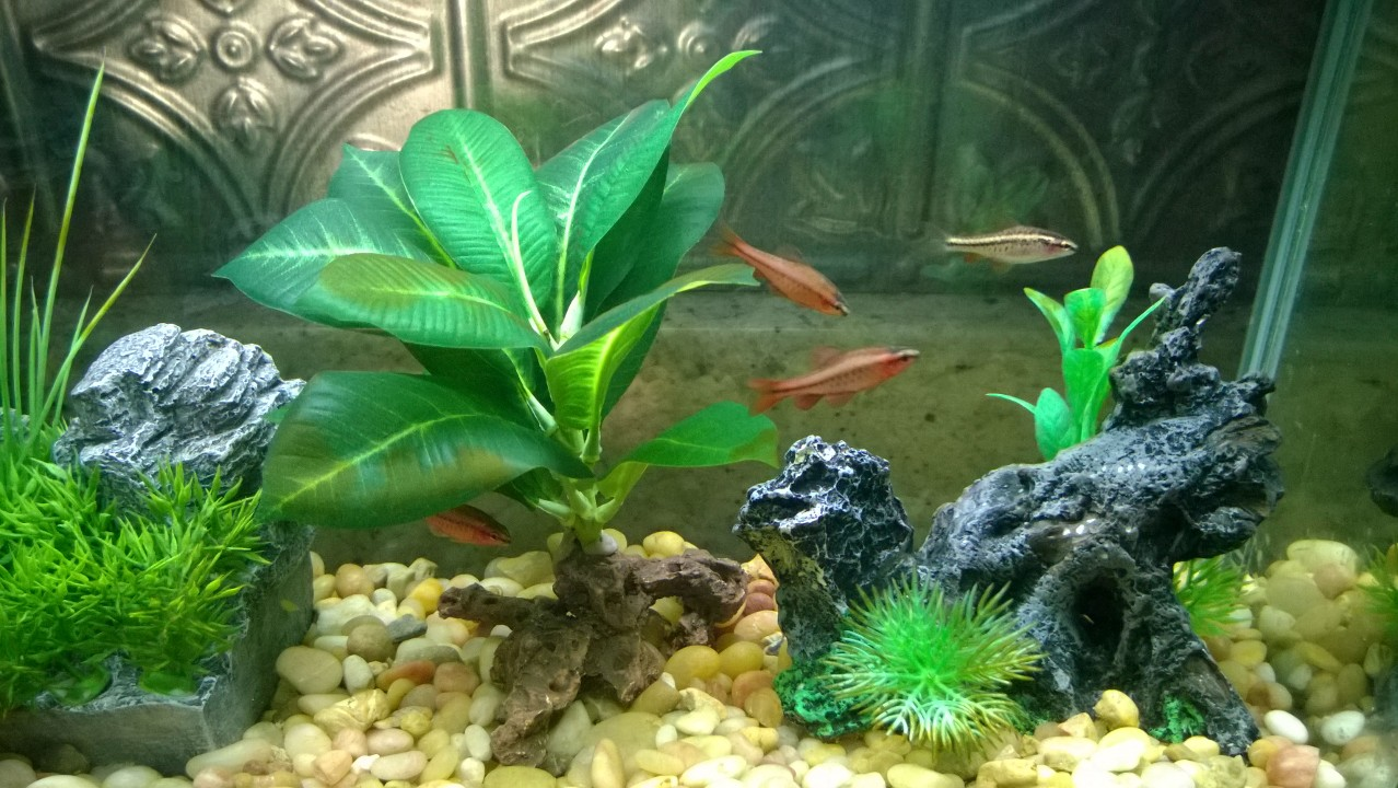 Fish tank real plants - The Plants In The Tank Are All Fake At Times I Have Had Real Plants But They Are Harder To Take Care Of And Tend To Take