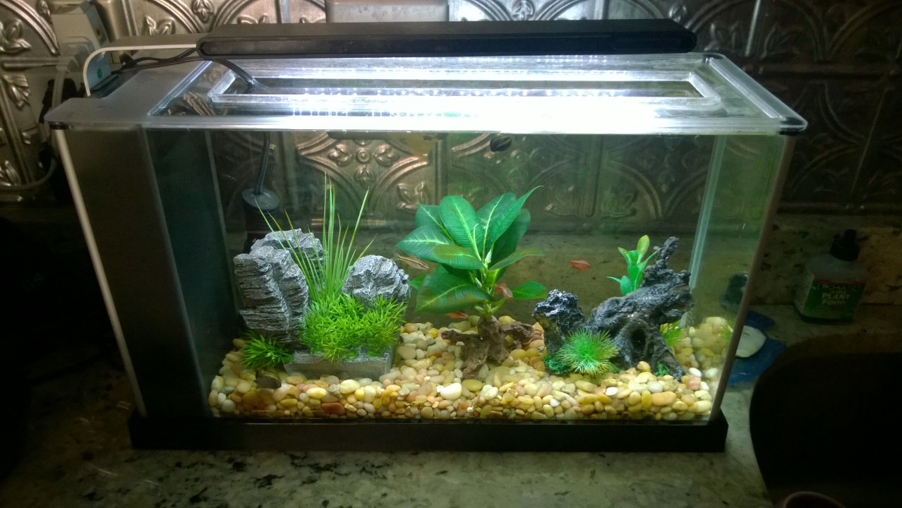 New fish tank friends orbited by nine dark moons for Deep blue fish tanks