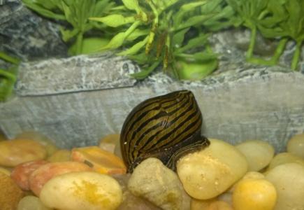 New Fish Tank Friends!