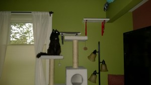bonkers climbing living room cat tree to alcove