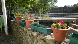 flower pots in yard