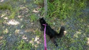 bonkers on pink leash
