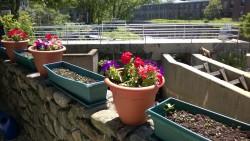 flower pots and seedlings in yard