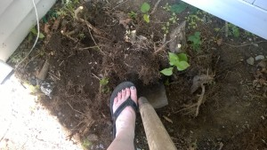 clearing the yard for the cat enclosure / catio wearing flip flops