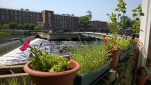 flower pots in yard overlooking the Ipswich River, Riverwalk, and Ebsco