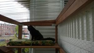 bonkers in the outdoor cat enclosure / catio