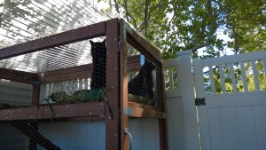 darwin and bonkers in the outdoor cat enclosure / catio