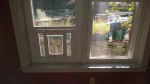 chubbykat cat door installed in new sash window in the dining room