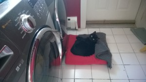 birdie relaxing in the laundry room while our replacement windows were installed