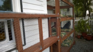 finalizing the connector and outdoor cat enclosure / catio construction