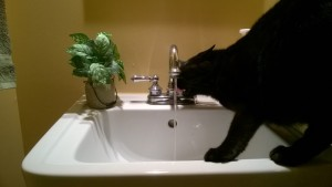 darwin drinking water from the bathroom sink