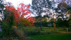 fall foliage in the tree outside our house