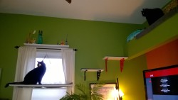 birdie and darwin on the living room platforms