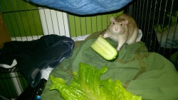 franc eating a cucumber and smiling