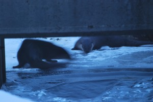 photo project part 7 2011-2015 ipswich ma otters