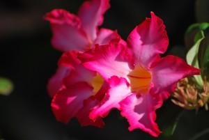 maui hawaii flowers
