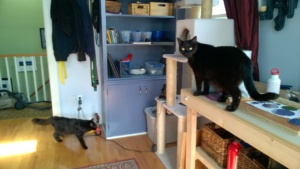 darwin and bonkers checking out my new workbench in the girl cave
