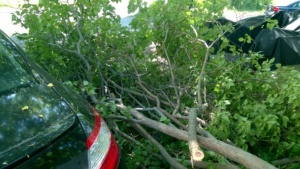 the lilac branches next to my car after i chopped the tree down to almost nothing