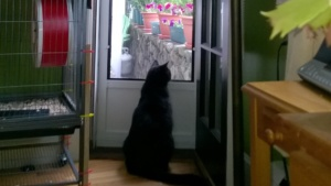 darwin watching birds out the newly painted back door