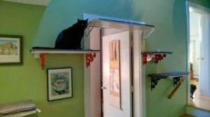 birdie checking out the new upstairs hall cat platforms