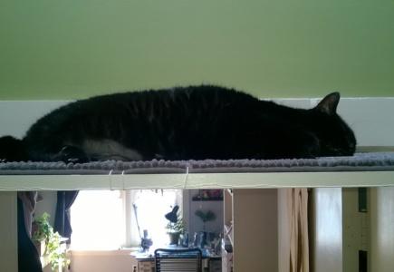 Upstairs Cat Platforms – Part 9