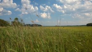 ipswich marsh near crane beach