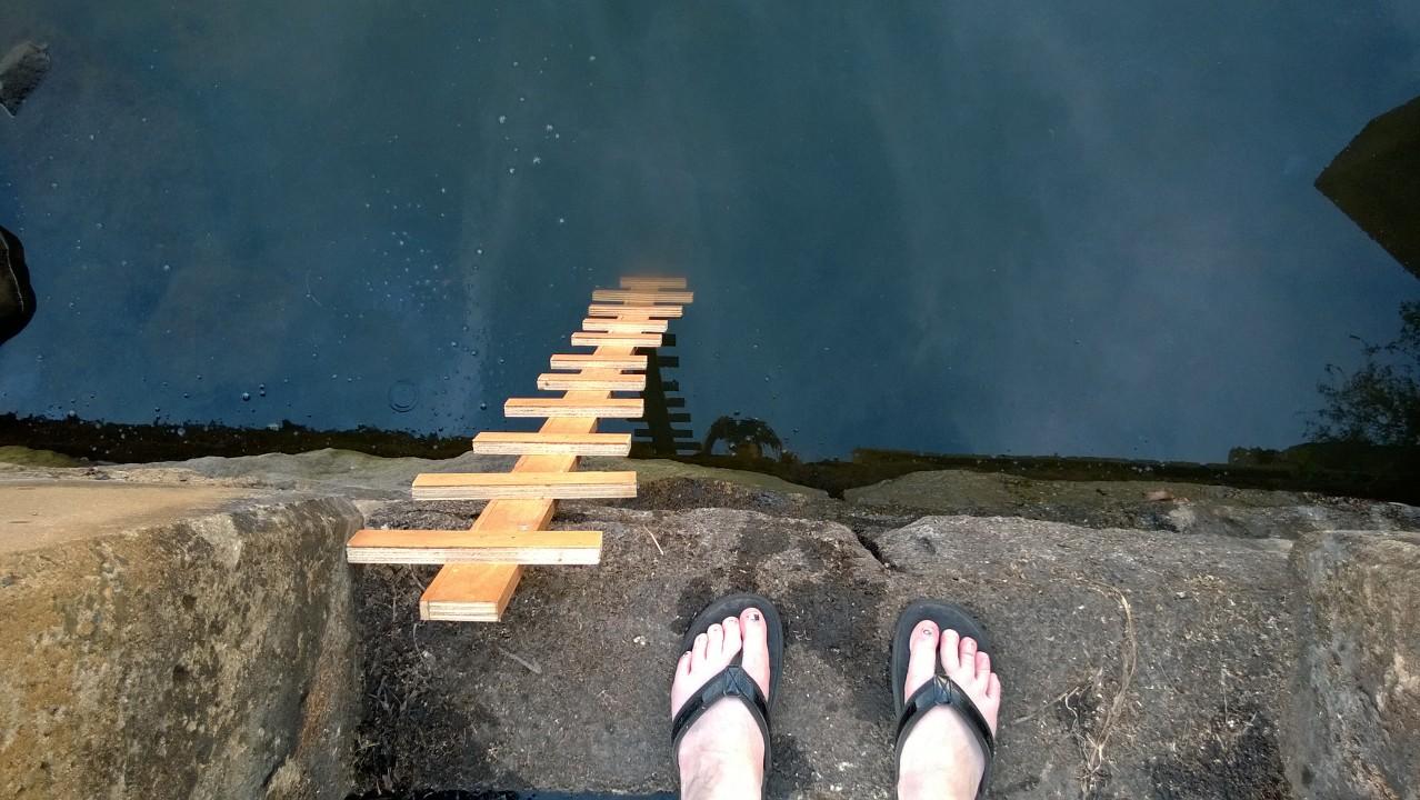 A Wee Beaver & A Wee Ladder