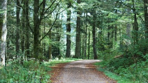 walking through the black forest in triberg, germany