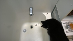 darwin was very curious to know what i was doing with the shower drain