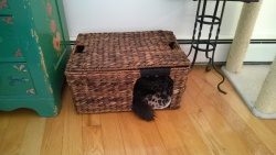 bonkers inside the pottery barn woven basket i cut into a cat bed