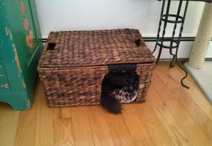 Converting a Woven Basket to a Cat Bed